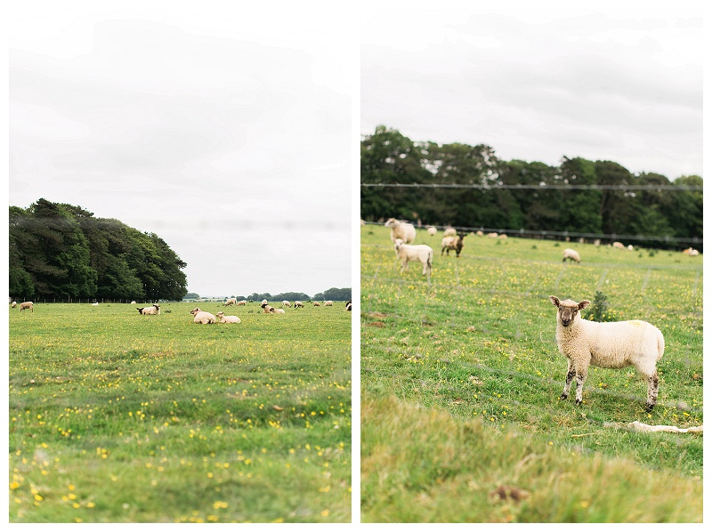 england_houses_a_walk_through_england_with_natalie_jayne_photography_by_natalie_jayne_moore_sheep