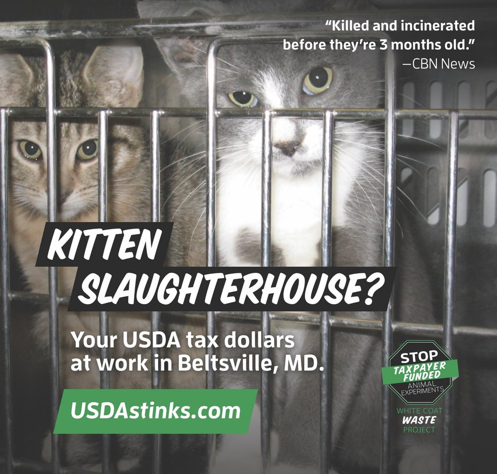 Kitten_Slaughterhouse_Ads_WCW_22x21_r1.jpg