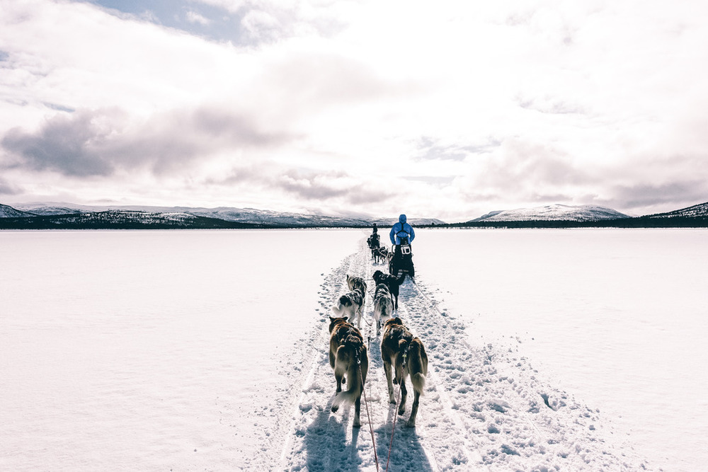 fjallraven polar dog sleds