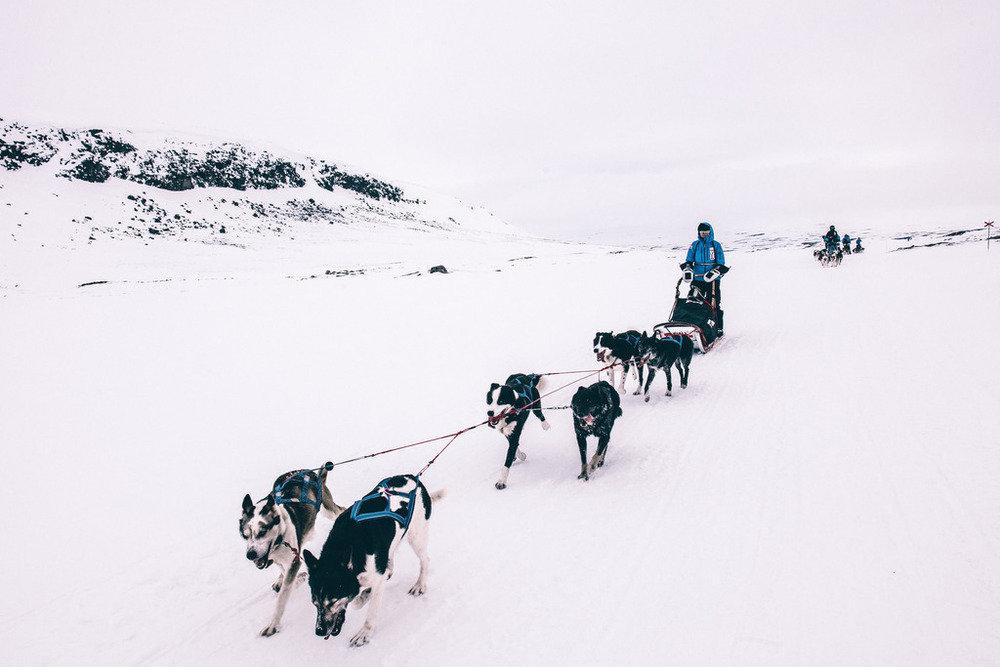 fjallraven polar expedition dog on the move
