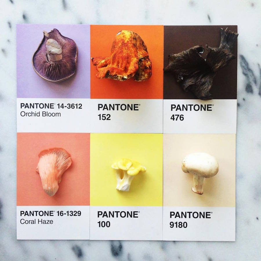 pantone-3-900x900.jpeg