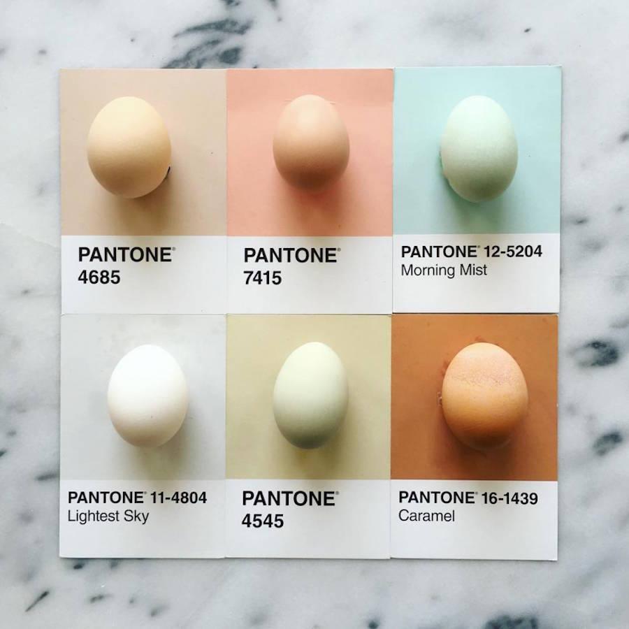 pantone-4-900x900.jpeg