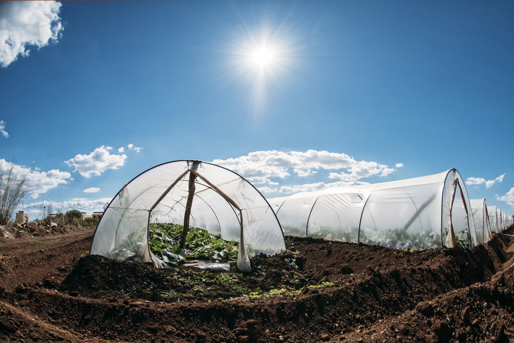 Scenario 1: Food as a natural resource