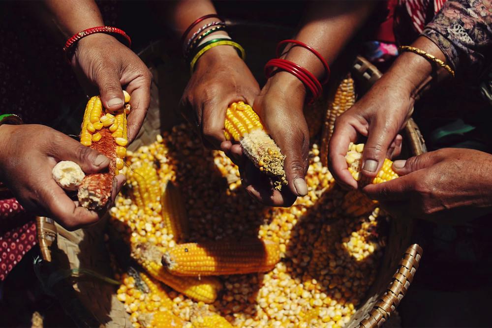 Scenario 4: Food as nutrition
