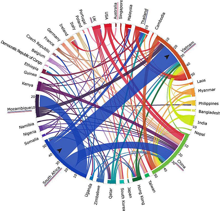 Zum Vergrößern klicken. Die aktuellen illegalen Handelswege (Grafik: Nikkita Patel)