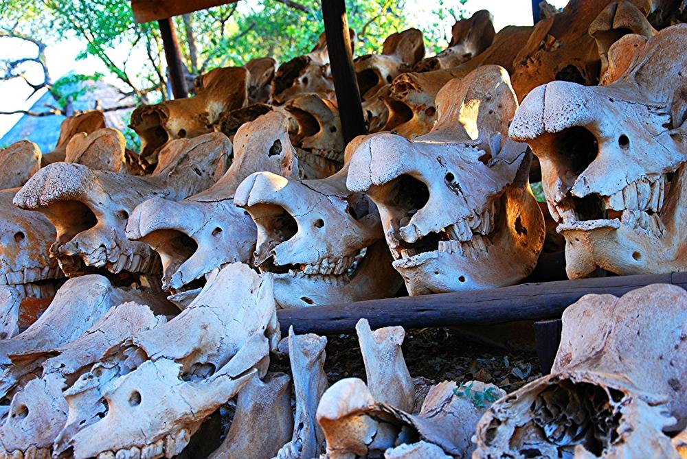 Zeugen des Rhinowars in Swaziland (Foto: FvK)