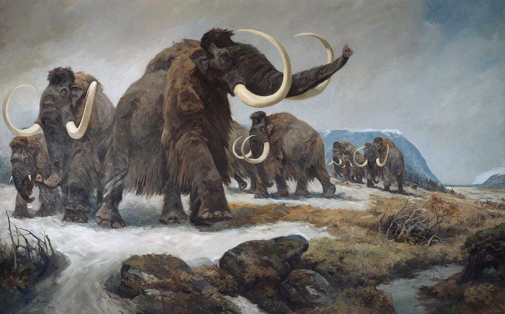 Mammut nicht Mammufant beim Festtreten sibirischen Schnees © NHM Wien/Kurt Kracher