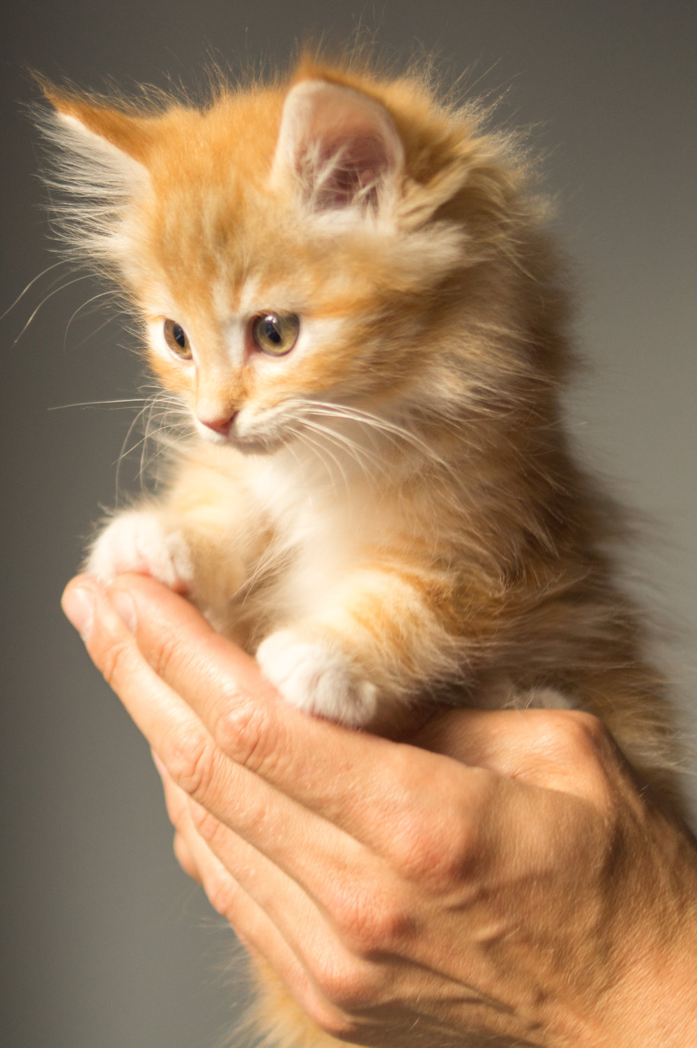"""That  kitten  . "" (Moments before she sheathes her claws inside your finger.) "" E  njoy those cuddles..."""