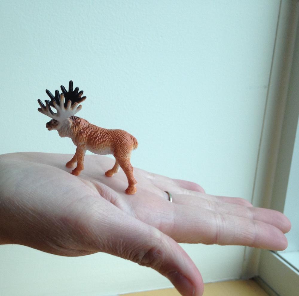 Moose in Hand.jpg