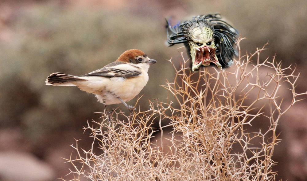 shrike-with-predator-head.jpg
