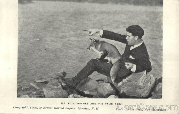 1906 postcard of Ernest Harold Baynes and his pet fox in Corbin's Park   Courtesy of Brian Meyette