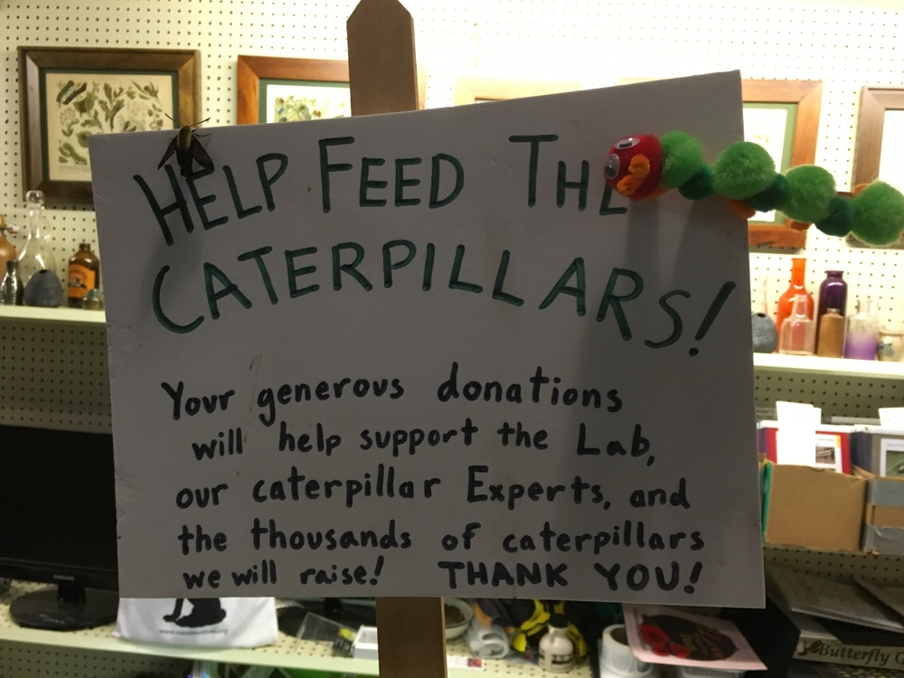 Thanks to the Caterpillar Lab in Keene, NH!