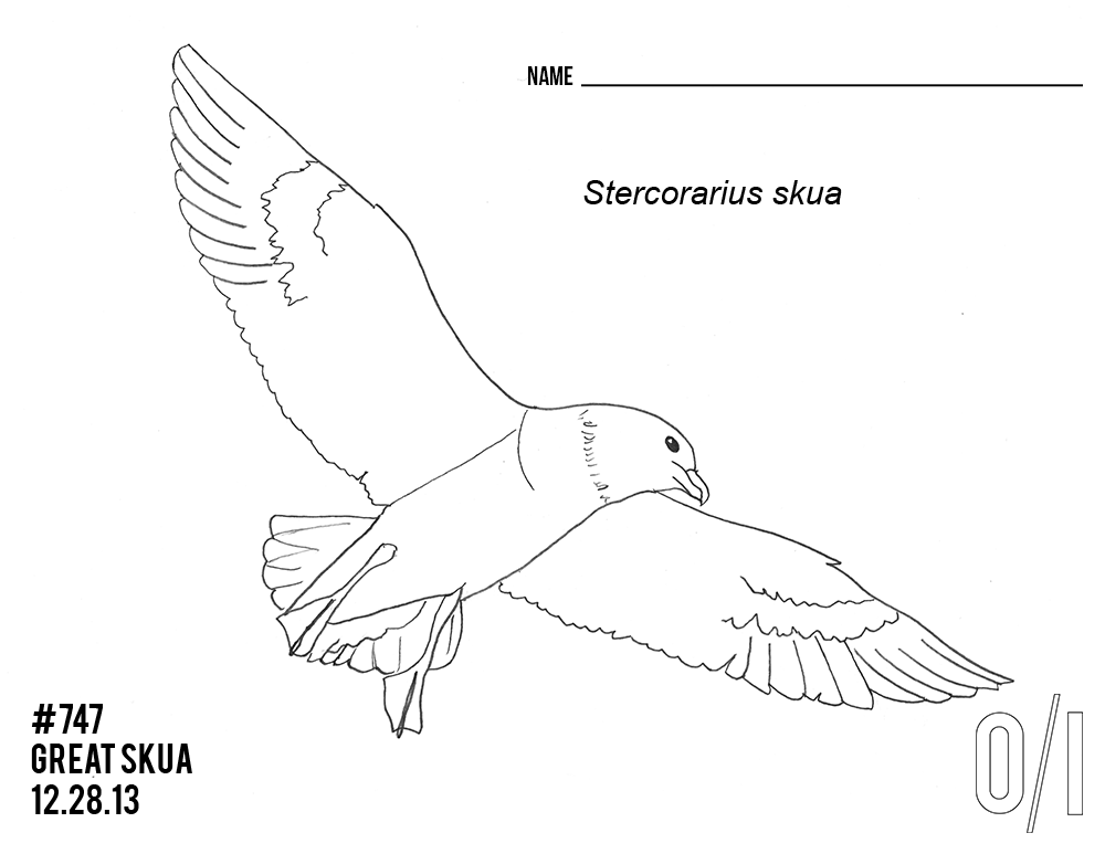 Great-Skua-coloring-page.png