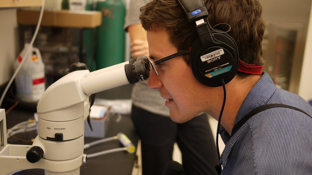 Sam takes a look at some of the samples under a microscope.   Photo: Logan Shannon