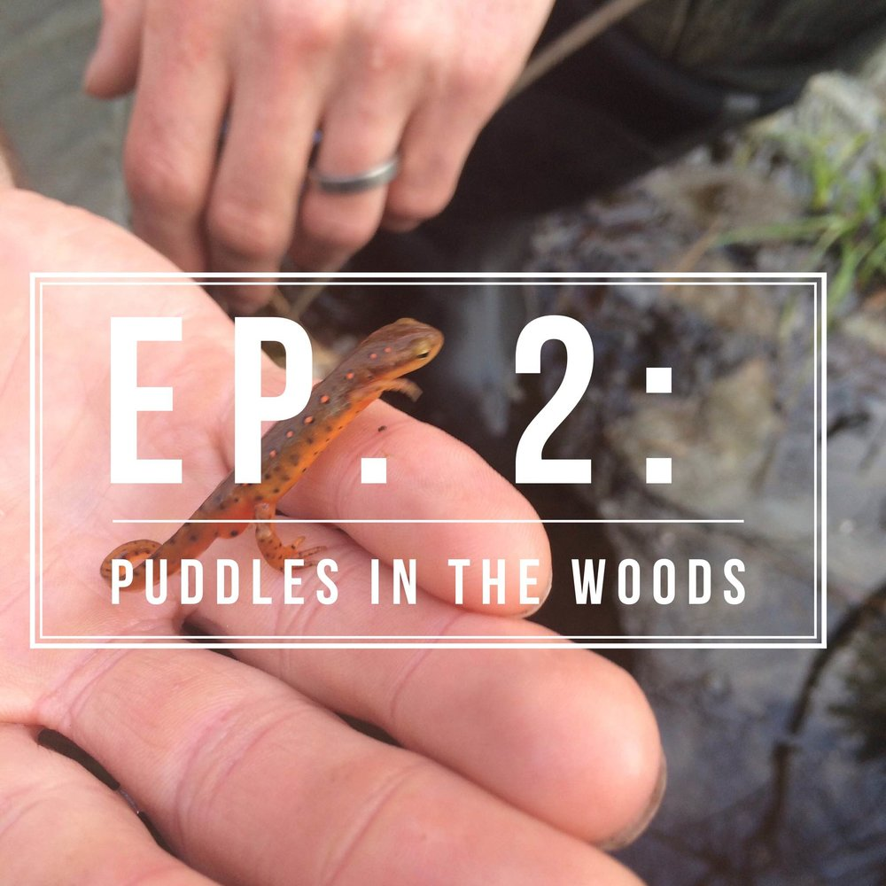 Episode 2: Puddles in the Woods