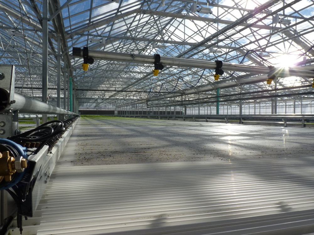 Inside Lef Farms 50,000 sq. ft. greenhouse | Photo: Todd Bookman