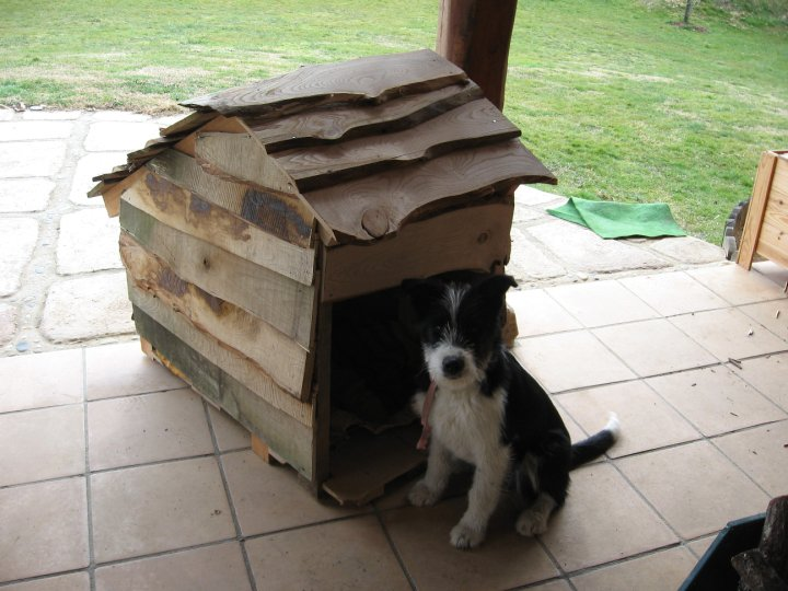 A dog enjoys the house Sam & Aubrey built.