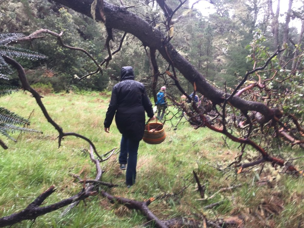 True mushroom hunters collect their bounty in baskets, to prevent the fungi from getting squashed. Plastic bags are a no-no: By day's end, mushrooms turn to mush. | Photo: Barbara Paulsen