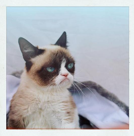How did we get here? via  real grumpy cat