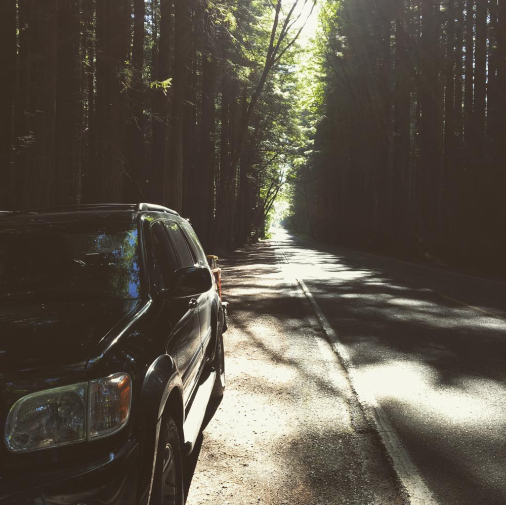 Road trips through the Redwoods in California