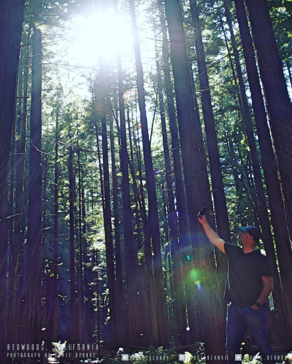 One of my favorite places: Redwoods California