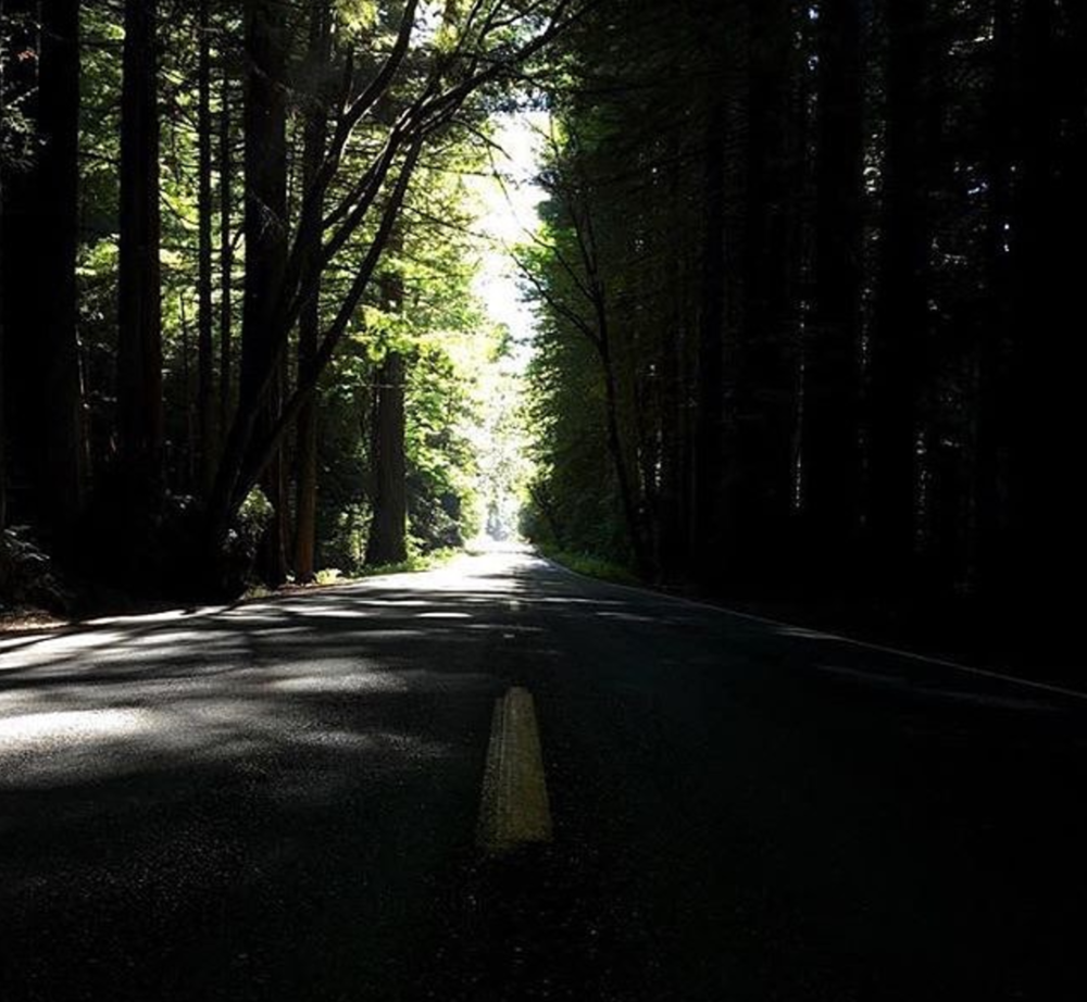 A Lonely road deep in the Redwoods in Northern California