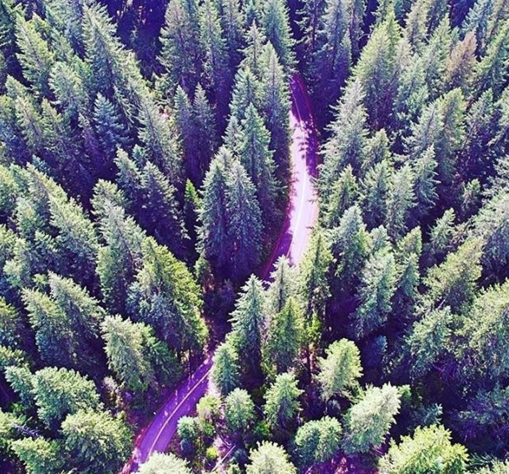 I love windy little roads deep in Central Oregon!