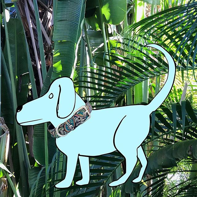woof, woof woof, WOOF WOOF! woof Wooferty woof! woof woof woof woof woof woof woooooof. woof woof woof @farm_stand @esp_wef. ⠀⠀⠀⠀⠀⠀⠀⠀⠀ (yes, that's right, DOG COLLARS! in Liberty fabrics! large dog and small dog sizes available. today and tomorrow @farm_stand @esp_wef). ps Farm Stand is located at the horse show in between Pony Island and the Grand Hunter Ring 🌴 come see us! ⠀⠀⠀⠀⠀⠀⠀⠀⠀ #choixhome #choixpping #farmstand #woof #dogcollars #libertyfabrics #winterequestrianfestival #wef2019 #horseshowlife #wellingtonflorida #palmbeachpopupshop