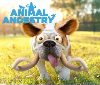 Animal Ancestry via Ice Age: Collision Course