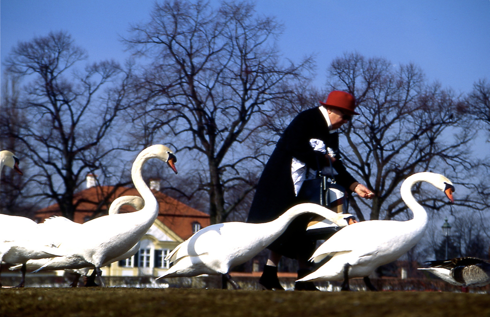 Geese Mama337.jpg
