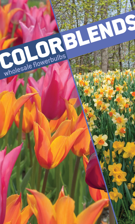 Colorblends Wholesale Flower Bulbs