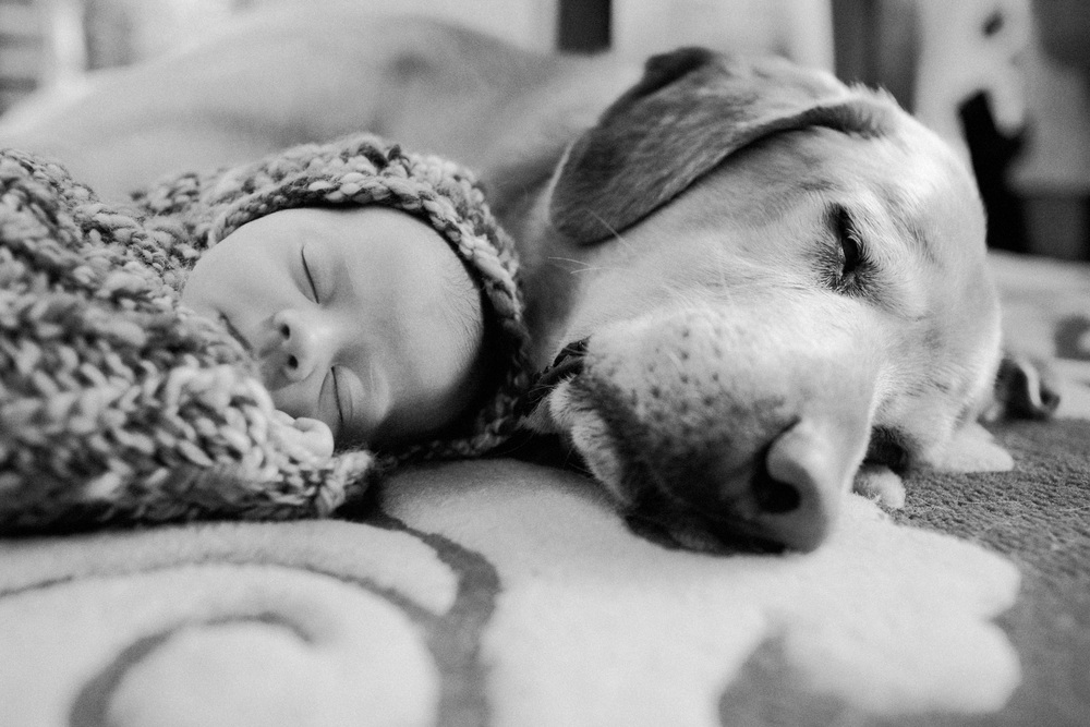 philadelphia pet and newborn photography