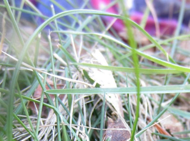 ladybug_1_2.jpg