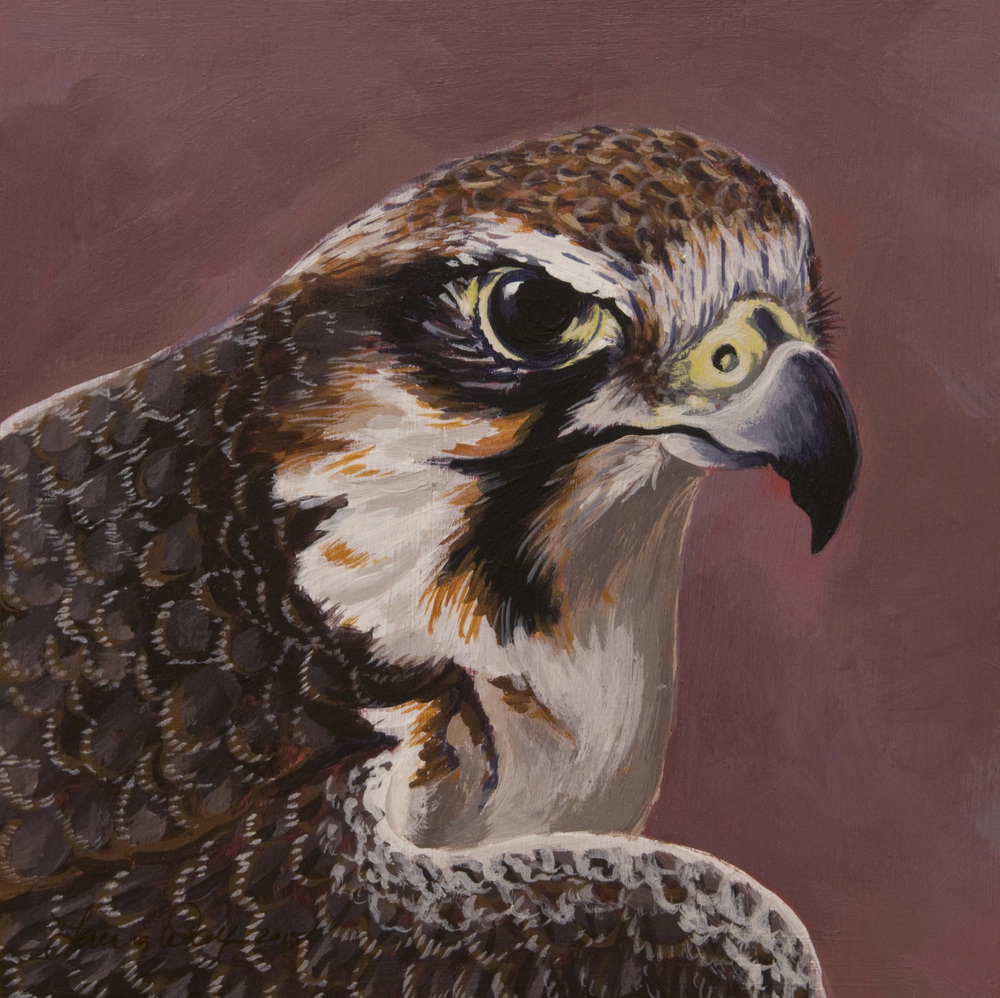 Lanner Falcon, Acrylic on 8x8 inch cradled wood panel