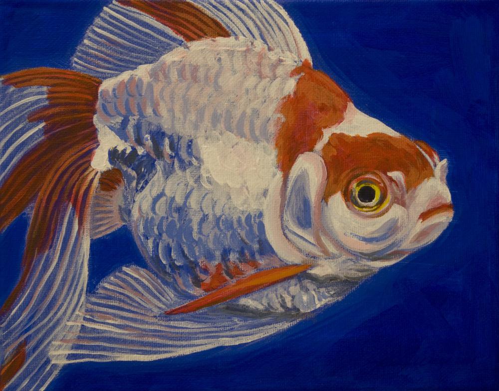 Ryukin Goldfish 2