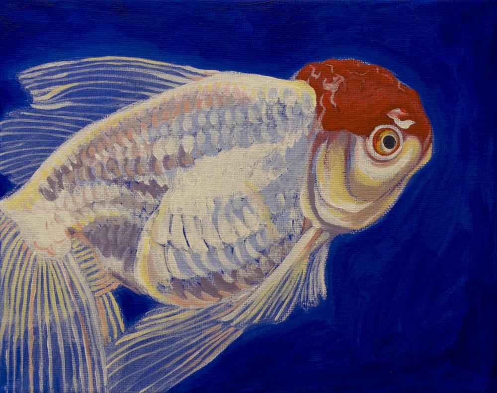 Oranda Goldfish 2