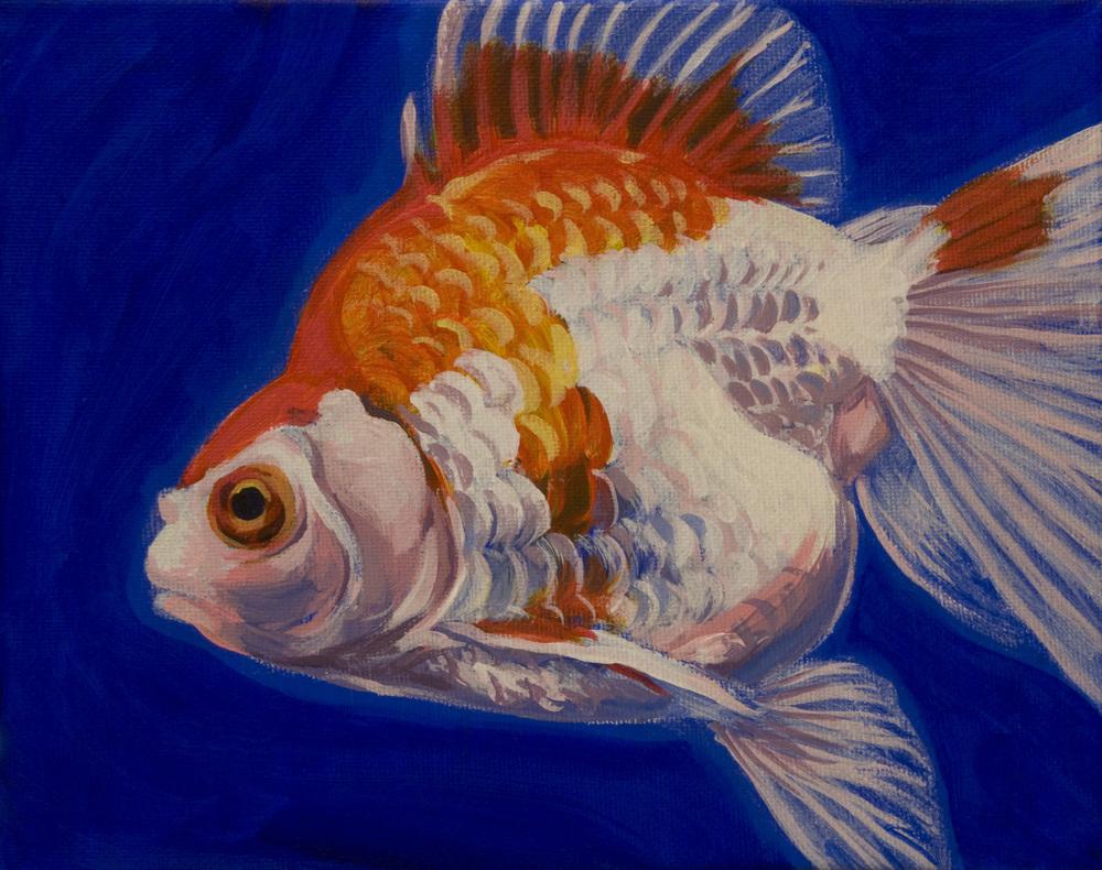 Ryukin Goldfish 1