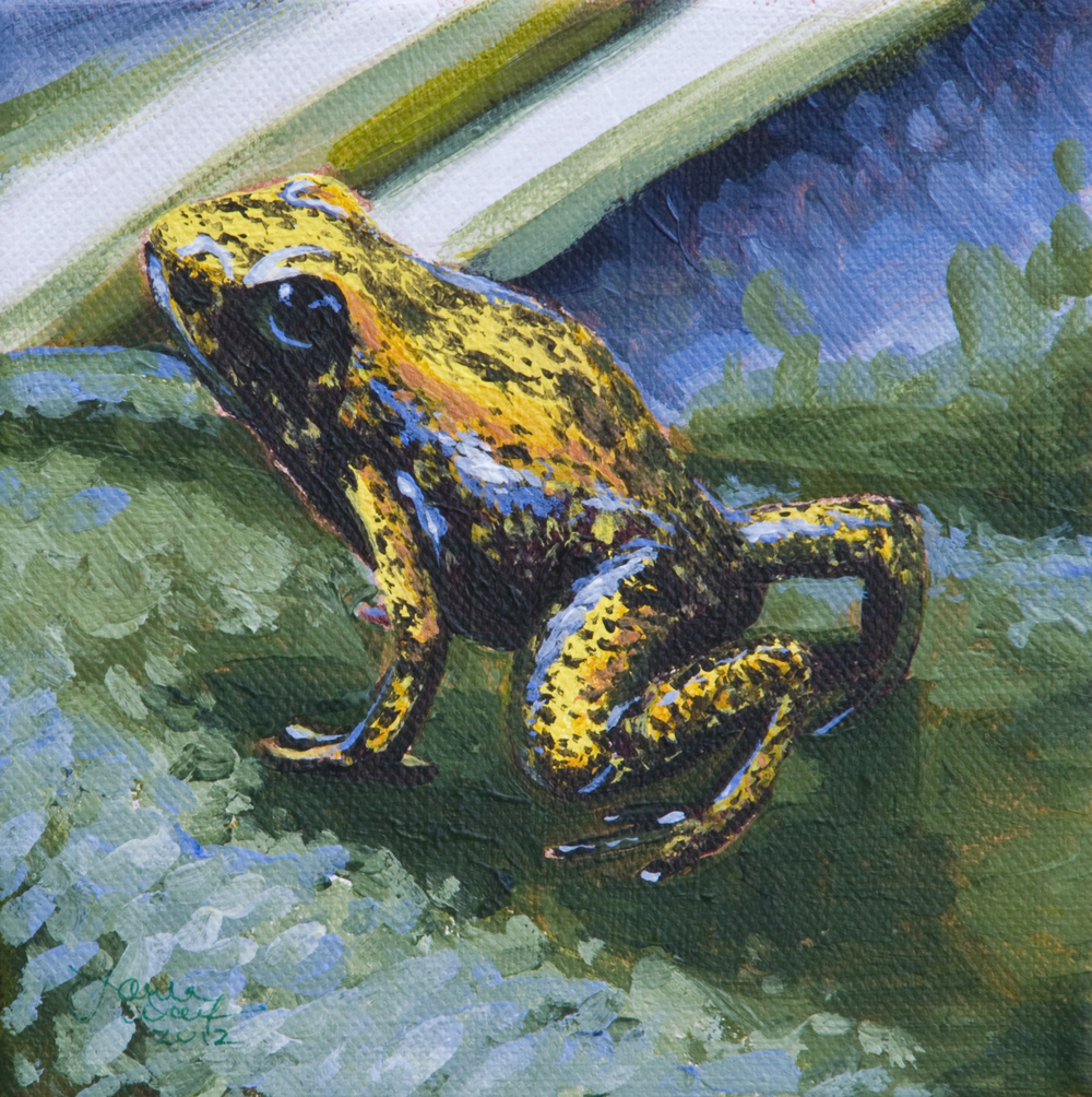 Black Legged Poison Dart Frog