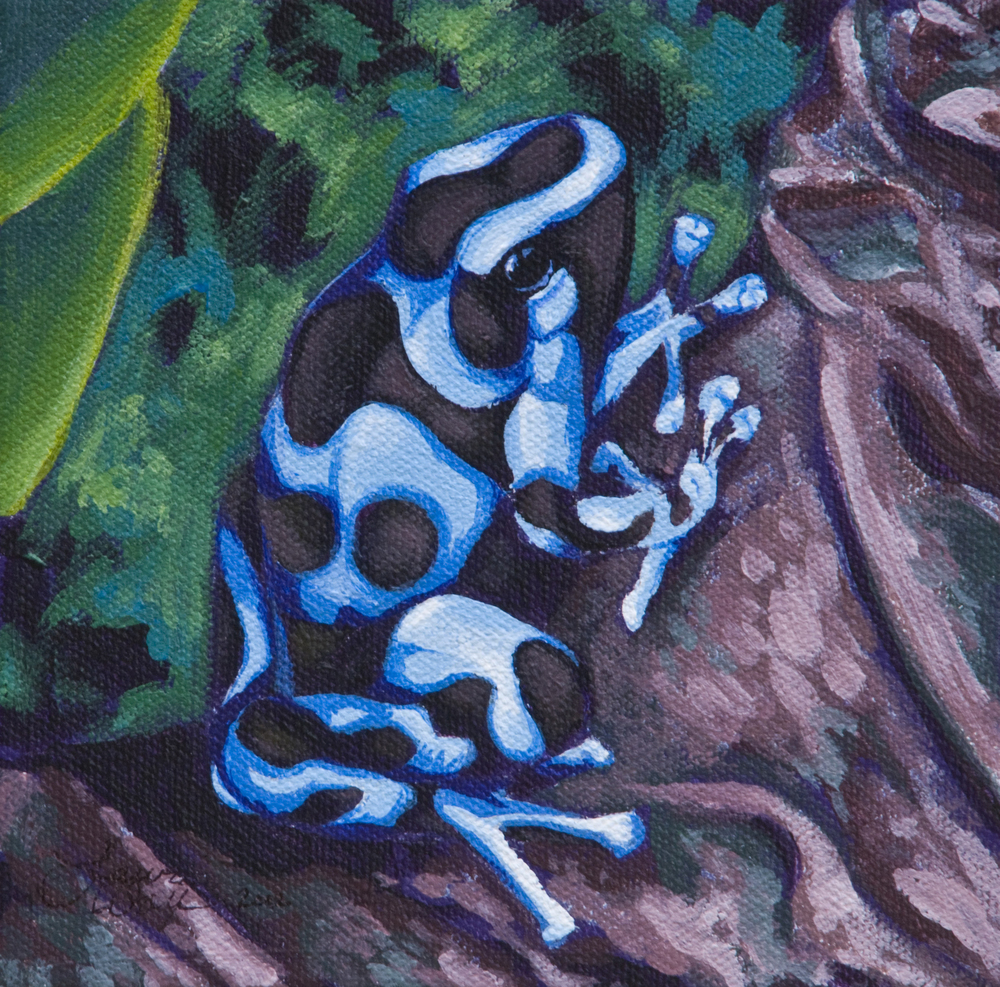 Blue & Green Poison Dart Frog