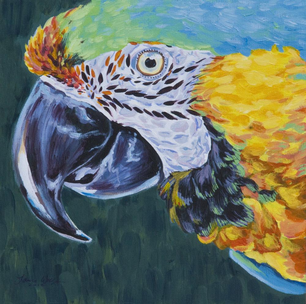 Catalina Macaw
