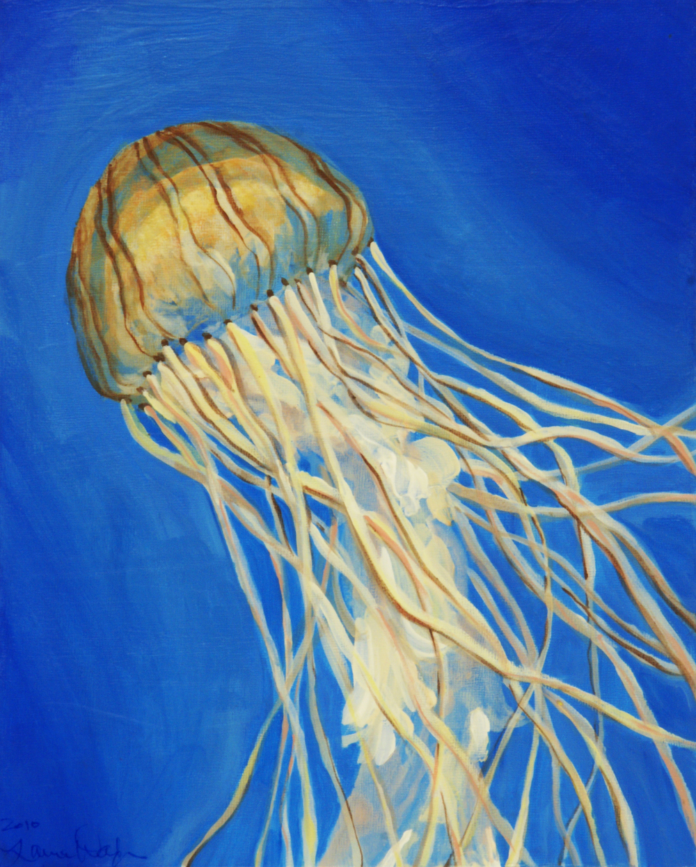 Northern Sea Nettle
