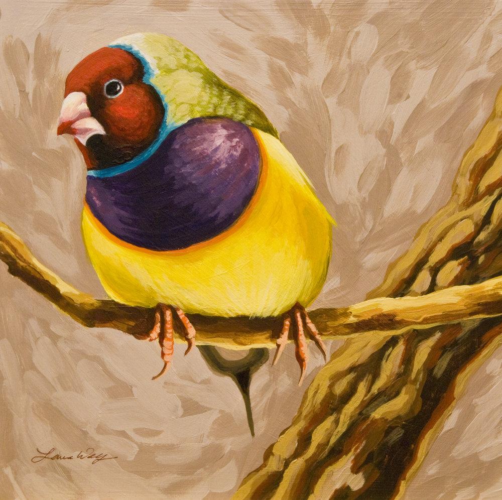 Gouldian Finch 2