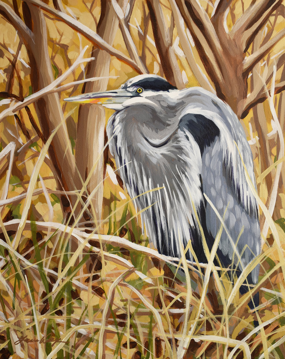 Great Blue Heron for Grandma