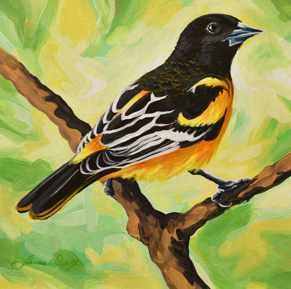 Baltimore Oriole 4