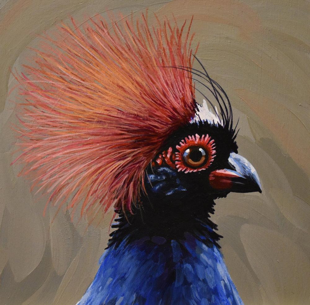 Crested Wood Partridge Portrait