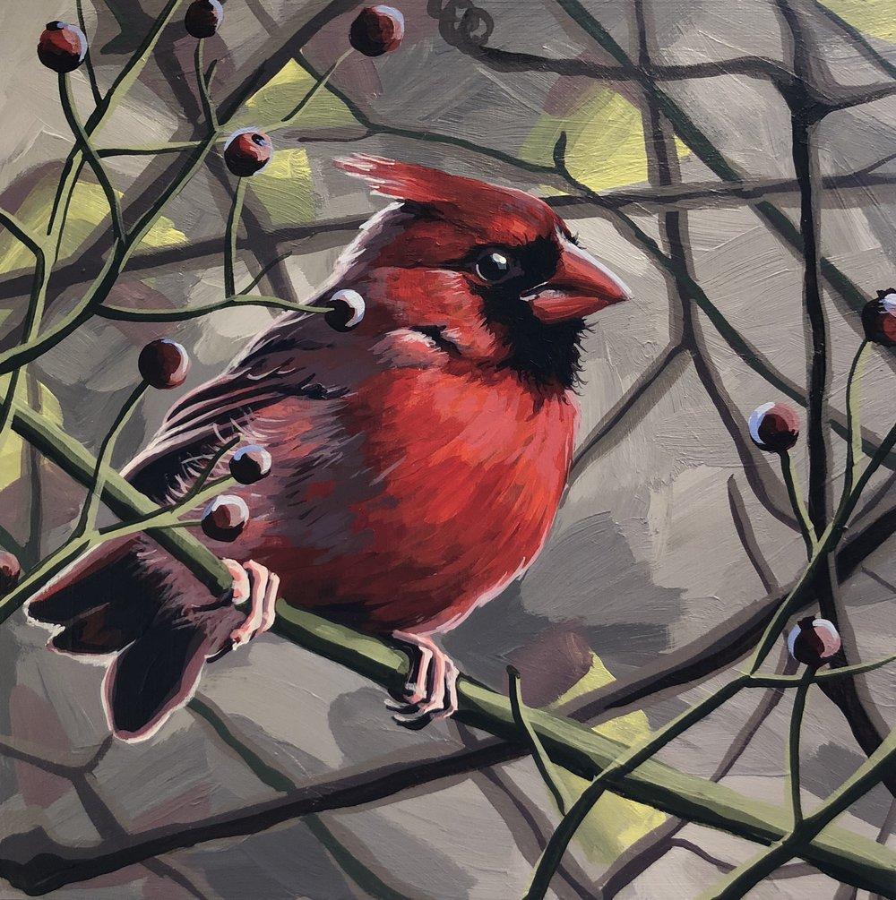 Northern Cardinal 6