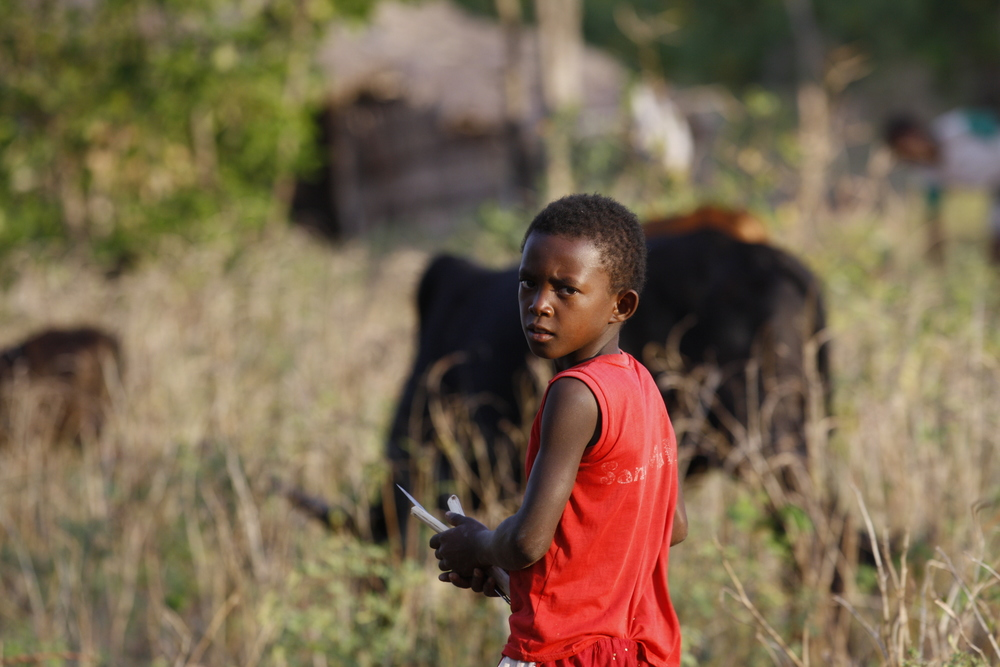 Young cattle (omby) herder, near Mangaoko (Diego), Madagascar