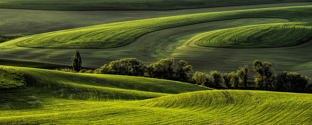 Light on the land—the Palouse  (Photo Credit:   Louise Shoemaker)