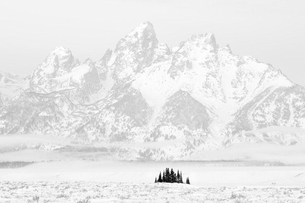 Trees and Tetons, Grand Teton National Park  (Photo Credit: Chuck Kimmerle)