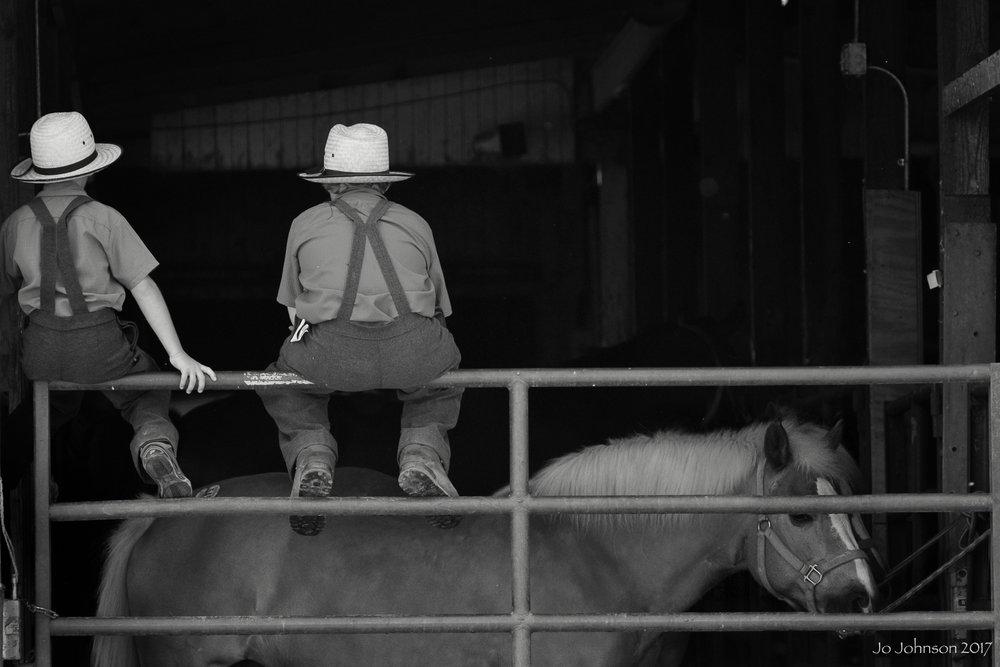 """""""Amish Horse Auction"""" - Ohio"""